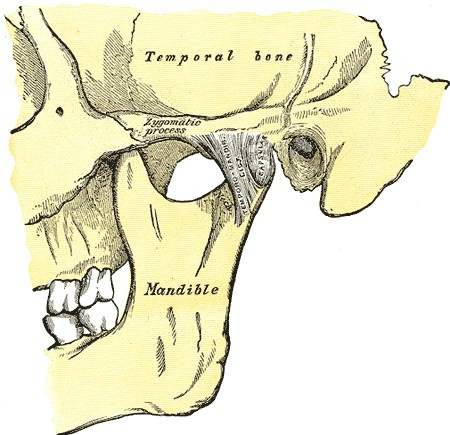 Medical illustration of Temporo-Mandibular Joint